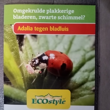 adalia tegen bladluis