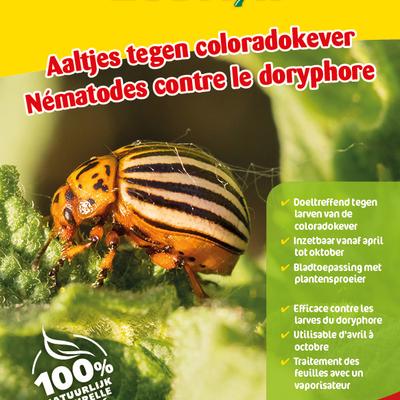Aaltjes tegen larven coloradokever 50 miljoen / 100 m²