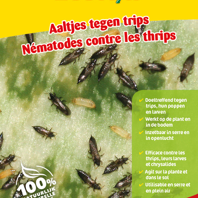 Aaltjes tegen larven trips 50 miljoen / 100 m²