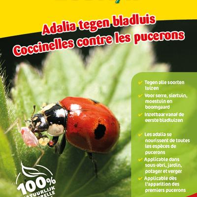 Lieveheersbeestjes tegen luizen 50 larven