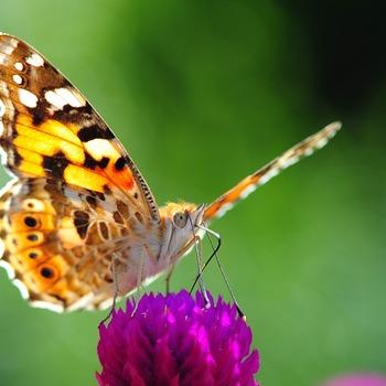 28 & 29 juli - Het Grote Vlinderweekend !
