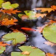 September - Herfst rond en in de vijver