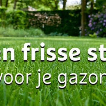 WORKSHOP FRISSE START GAZON - 10/03