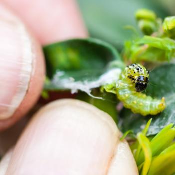 Insecten-, slakken & ziektebestrijders