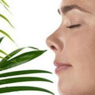 7x gezonde en mooie planten