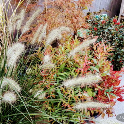 Buitenplanten per familie