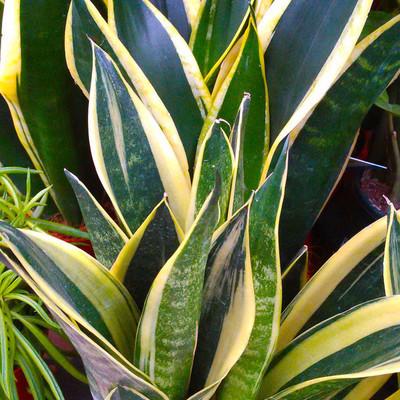 Gemakkelijke planten