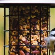 Vogelhuisjes en zaden