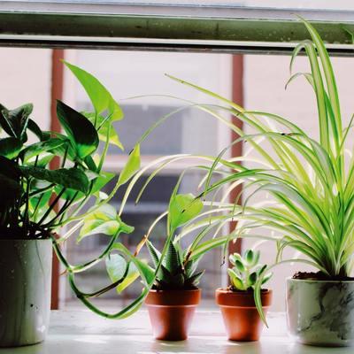 Lichtbehoefte van kamerplanten