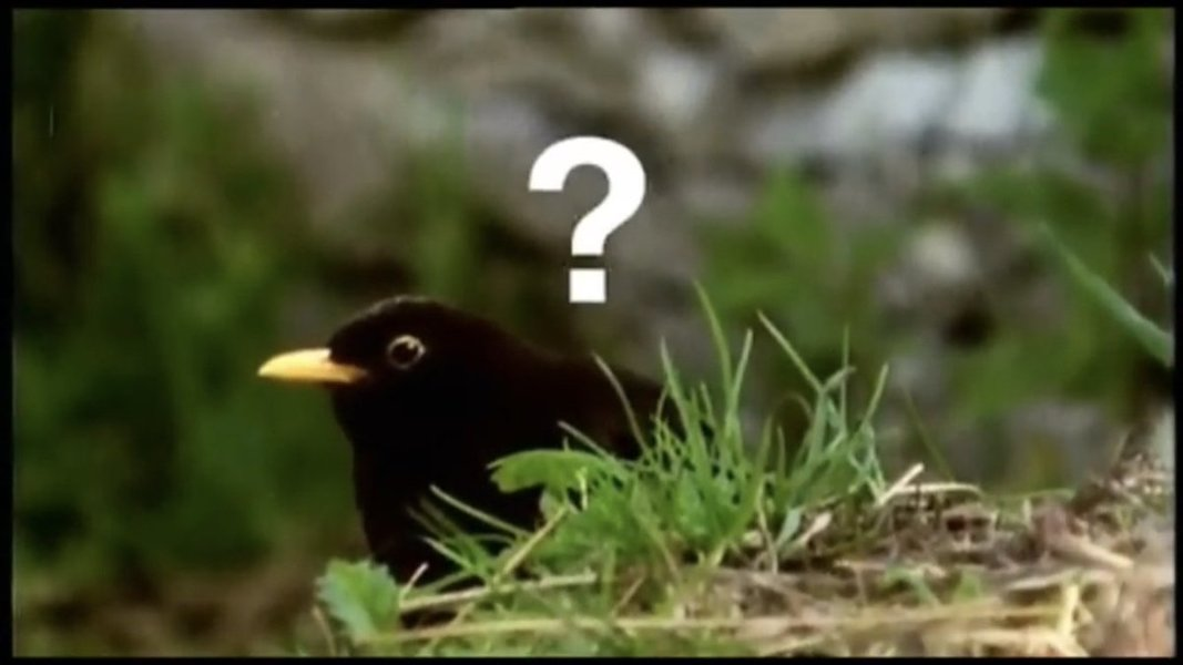 What are birds? We just don't know.